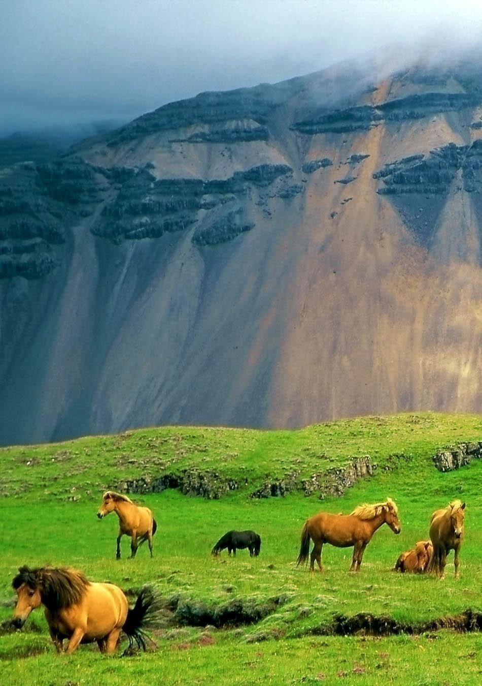 Icelandic horses in a peaceful meadow dominated by a volcanic rose-tinted mountain, Iceland | Iceland Travel Guide