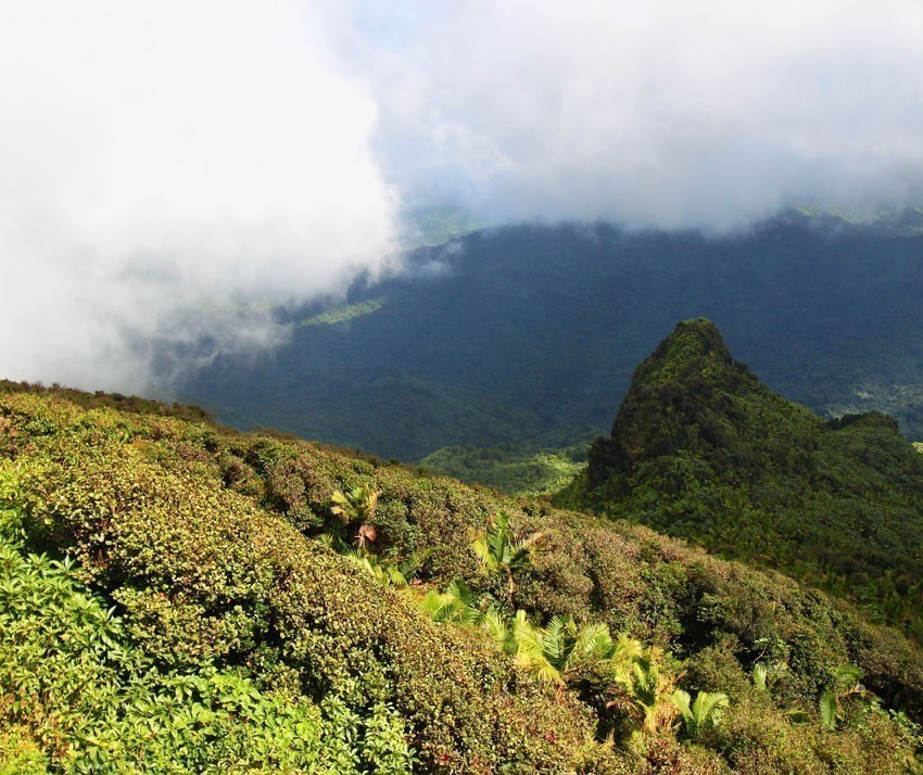 Mist covers the rainforest peaks of El Yunque National Forest in Puerto Rico | Puerto Rico Travel Guide
