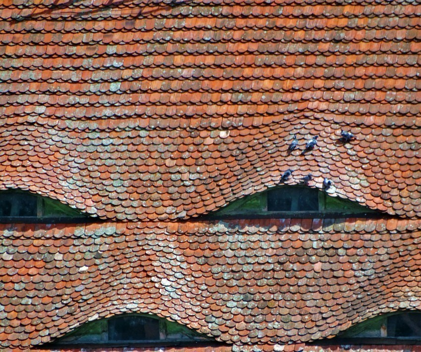 Eyes that stare. Typical roof of a home in Sighisoara | 5 Reasons Why Romania is the Country Every Traveler Needs to Visit