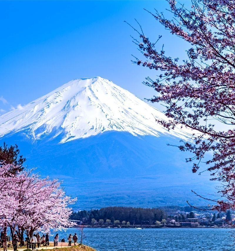 Cherry blossom festival at lake Kawaguchi | TOP 10 Tourist Attractions in Japan You Must Visit