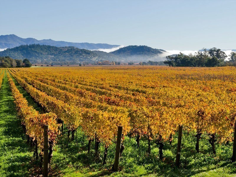 Colorful vineyards in Napa Valley, a place that become a tourist attraction in California, USA | 10 Best Places To Visit In California