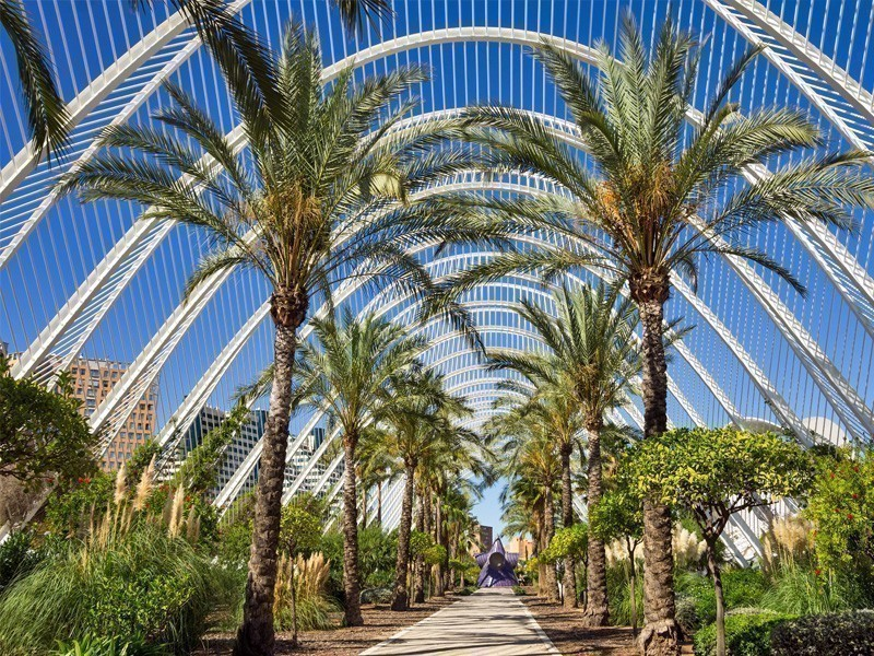 Palm alley in the City of Arts and Sciences, Valencia, Spain | What to Do in Valencia in 3 Days